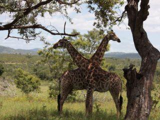 Parc Krugger en Afrique du Sud