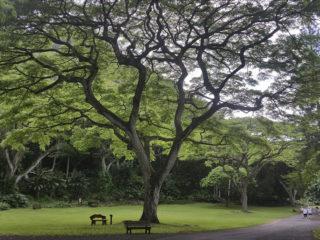 Exposition 2018 : Les arbres & Dans la rue