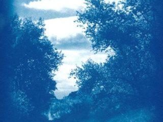 Atelier : le cyanotype